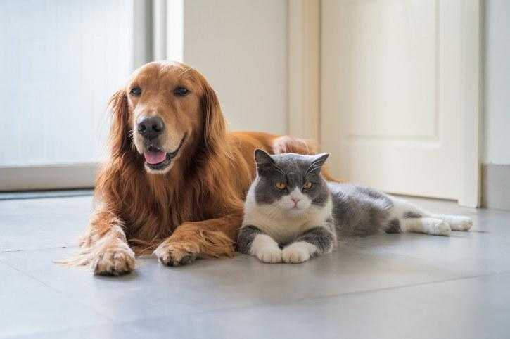 A dog and a cat sitting next to each other
