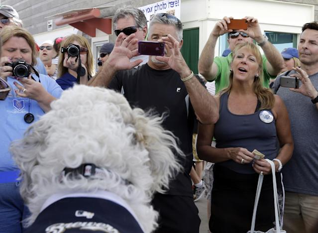 Fans line up to take photos of the Milwaukee Brewers unofficial mascot, Hank, during an exhibition spring baseball game against the Cincinnati Reds, Saturday, March 15, 2014, in Phoenix. (AP Photo/Morry Gash)