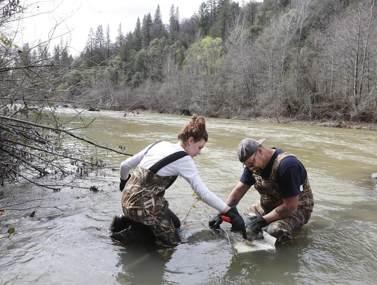 In this photo taken Tuesday, March 4, 2014 Tim Amavisca, 38, and his daughter Hailey, 15, use a sluice box that's used to trap gold flakes on a textured rubber mat as they search for gold along the Bear River near Colfax, Calif. Amavisca is among the amateur prospectors that have flocked to the Sierra Nevada foothills that, due to the historic drought, are taking advantage of the lower water levels to search for gold in riverbeds that have been unreachable for decades.(AP Photo/Rich Pedroncelli)