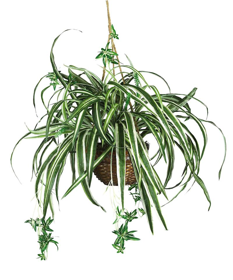 6 air cleaning plants to purify your space for Plants that are easy to maintain