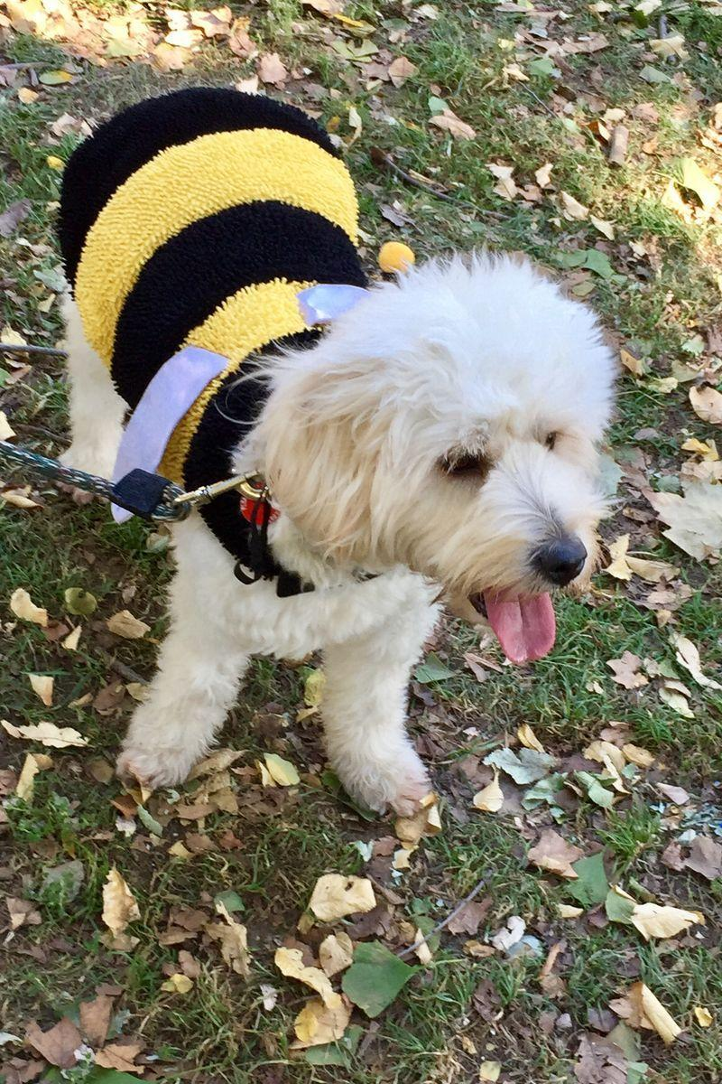 """<p>Answer: In 2017, the most popular pet costumes were pumpkins, hot dogs, superheroes, and bumblebees, <em>CNN</em> noted. If you want your dog to stand out, these <a href=""""https://www.womansday.com/life/pet-care/g1653/dog-halloween-costumes/"""" rel=""""nofollow noopener"""" target=""""_blank"""" data-ylk=""""slk:funny costumes"""" class=""""link rapid-noclick-resp"""">funny costumes</a> will do the trick. And these <a href=""""https://www.womansday.com/life/pet-care/g1883/pet-cat-halloween-costumes/"""" rel=""""nofollow noopener"""" target=""""_blank"""" data-ylk=""""slk:adorable cat costumes"""" class=""""link rapid-noclick-resp"""">adorable cat costumes</a> make sure your feline doesn't feel left out<strong><br></strong></p>"""