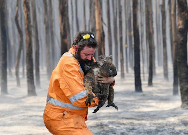 PHOTO: Adelaide wildlife rescuer Simon Adamczyk is seen with a koala rescued at a burning forest near Cape Borda on Kangaroo Island, southwest of Adelaide, Australia, Jan. 7, 2020. (David Mariuz/AAP via Reuters)