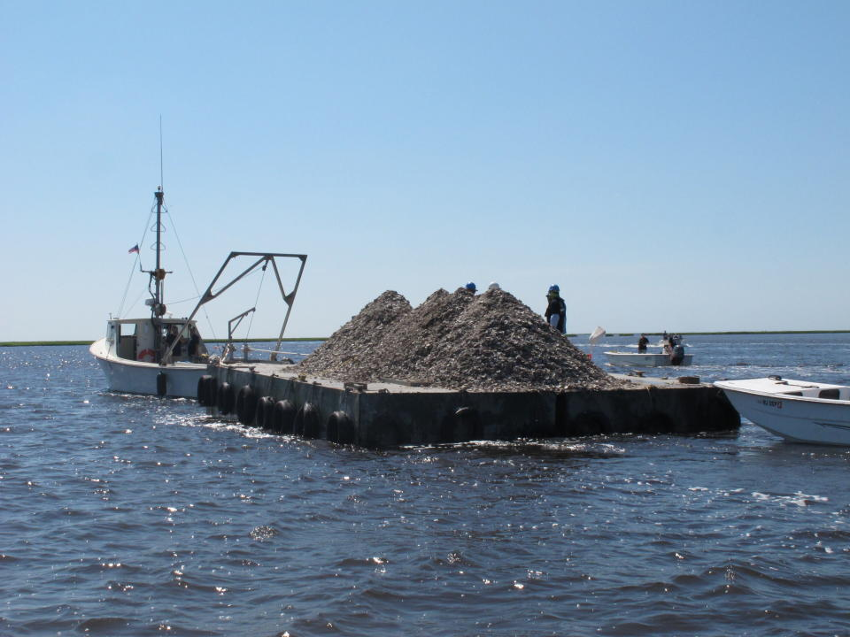 This June 29, 2021 photo shows a barge laden with 680 bushels of clam and oyster shells that are about to be dumped into the Mullica River in Port Republic, N.J. The shells are collected from restaurants in Atlantic City, dried, and placed into the river where they become the foundation for new oyster colonies as free-floating baby oysters attach to them and start to grow. Communities around the world are running similar shell recycling programs. (AP Photo/Wayne Parry)