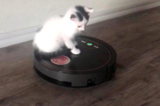 Boogie the cat riding a Roomba