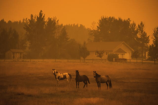 <p>Thick smoke from wildfires burning in the region fills the air and blocks out the sun as horses stand on a ranch just before 6 p.m, in Vanderhoof, British Columbia, on Wednesday Aug. 22, 2018. According to Environment Canada sunset in the town on Wednesday was to be at 8:30 p.m. (Darryl Dyck/The Canadian Press via AP) </p>