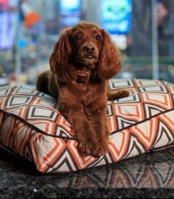 Worry-Free Travel to NYC Starts With Pet-Friendly Hotel at Times Square