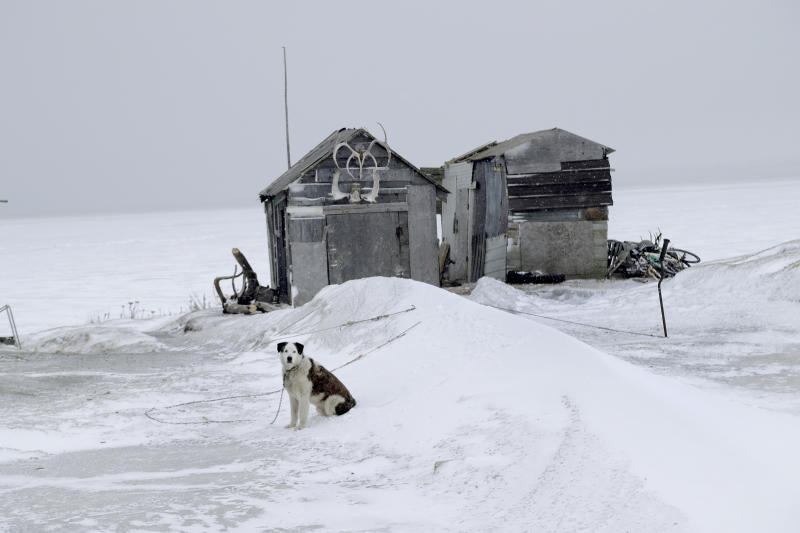 In this Feb. 18, 2019, photo, a dog sits outside a fish drying shed in the Native Village of St. Michael, Alaska. According to a list released in 2018 by Jesuits West, seven priests and one lay person were credibly accused of sexually abusing children in this town of 400 people between 1949 and 1986. (AP Photo/Wong Maye-E)