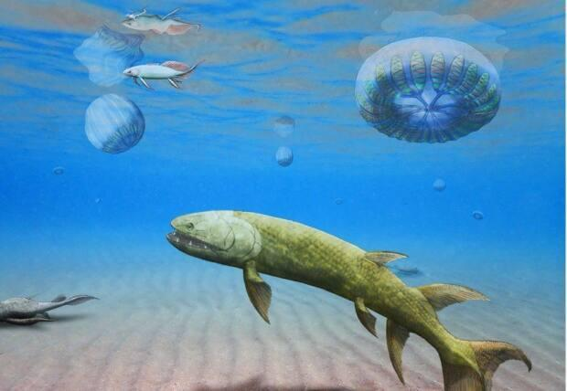 An illustration of the comb jelly, upper right, that was fossilized at Miguasha park. (Submitted by Richard Cloutier - image credit)