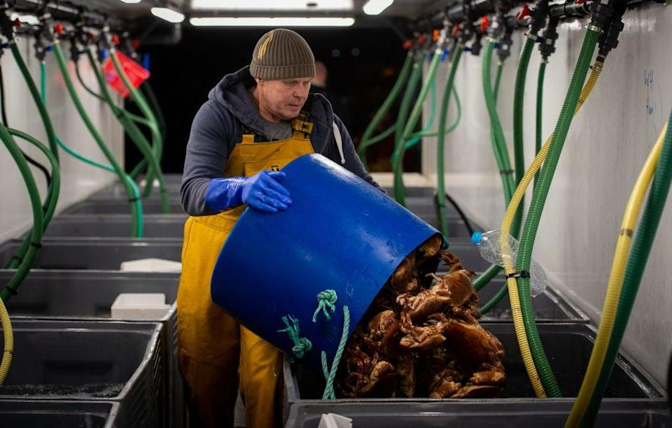 <p>Fishing firms and seafood exporters across the UK have been disrupted by the new post-Brexit customs checks and red-tape</p> (Getty)