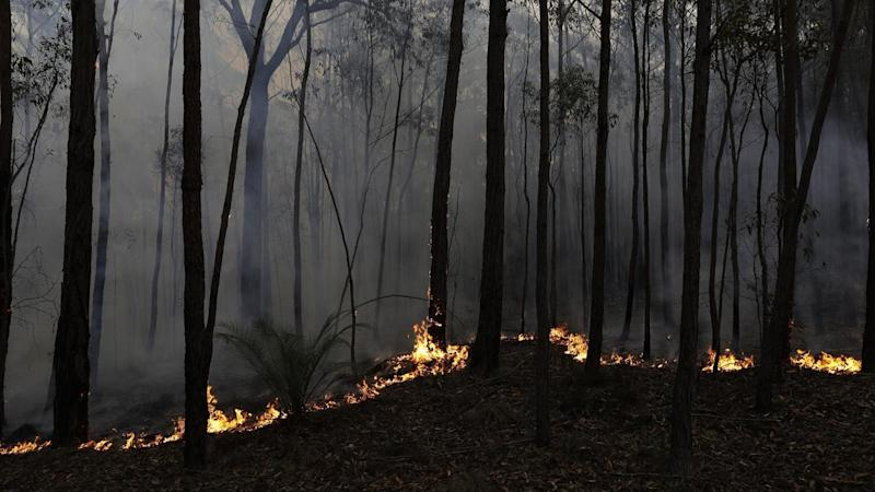 There are five emergency warnings in place for blazes across the NSW south coast