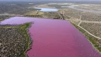 The waters of the Corfo lagoon are pink in Trelew, Chubut province, Argentina, Thursday, July 29, 2021. Local environmentalists attribute the color to increased pollution from a nearby industrial park. (AP Photo/Daniel Feldman)