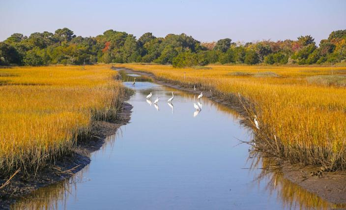 <p>South of Charleston, South Carolina you can visit Kiawah Island for some birdwatching. </p>