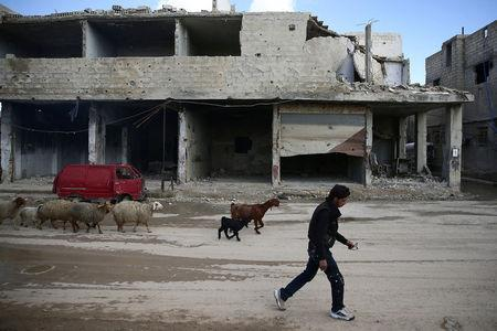 A civilian herds sheep near damaged buildings in the rebel-held besieged Douma neighbourhood of Damascus, Syria February 15, 2017. REUTERS/Bassam Khabieh