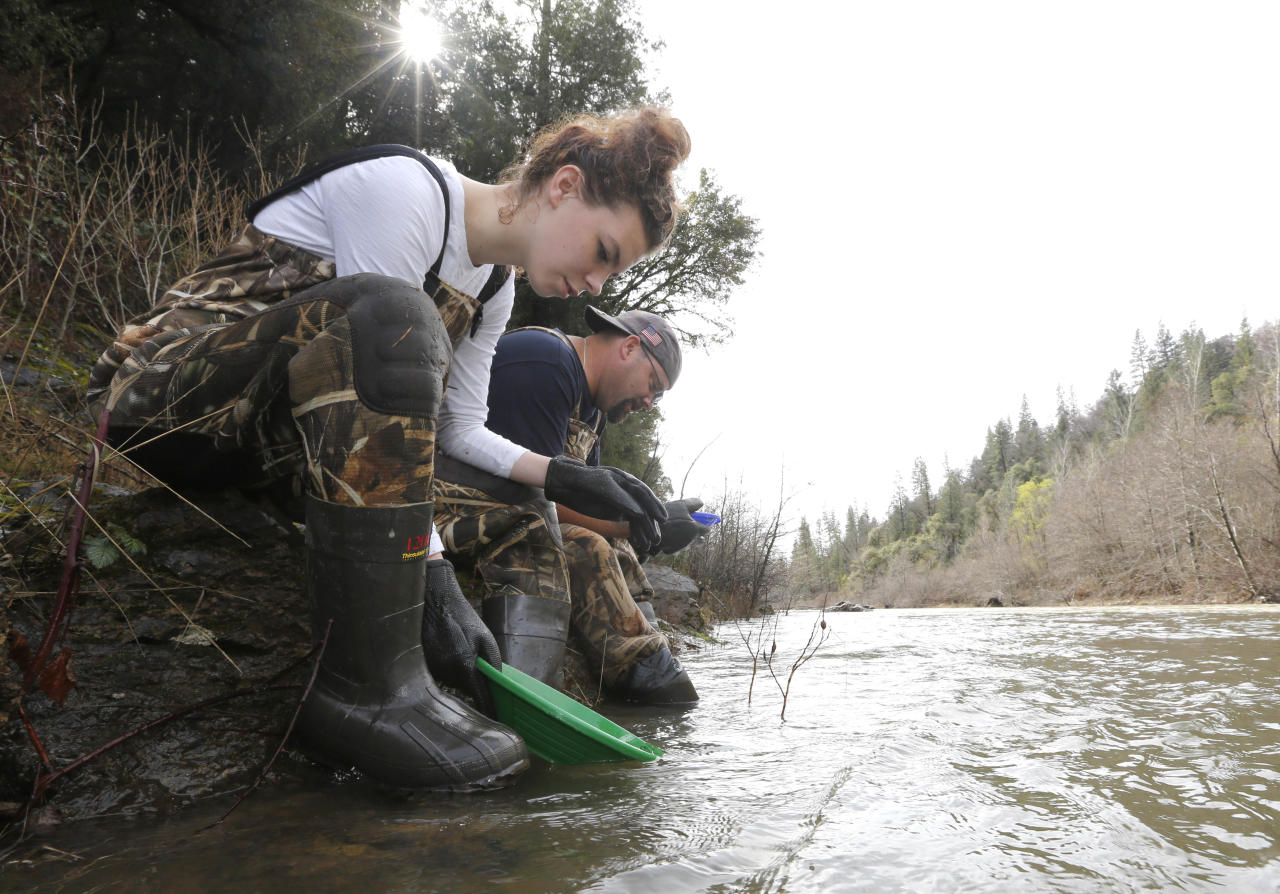 In this photo taken Tuesday, March 4, 2014 Tim Amavisca, 38, and his daughter Hailey, 15, pan for gold along the Bear River near Colfax, Calif. Amavisca is among the amateur prospectors that have flocked to the Sierra Nevada foothills that, due to the historic drought, are taking advantage of the lower water levels to search for gold in riverbeds that have been unreachable for decades.(AP Photo/Rich Pedroncelli)