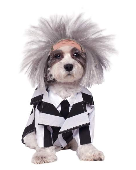 """<p>If you say Beetlejuice three times I'll probably go hide under the couch.</p><br><br><strong>Spirit Halloween</strong> Beetlejuice Pet Costume , $34.99, available at <a href=""""https://www.spirithalloween.com/product/beetlejuice-pet-costume-beetlejuice/88598.uts"""" rel=""""nofollow noopener"""" target=""""_blank"""" data-ylk=""""slk:Spirit Halloween"""" class=""""link rapid-noclick-resp"""">Spirit Halloween</a>"""