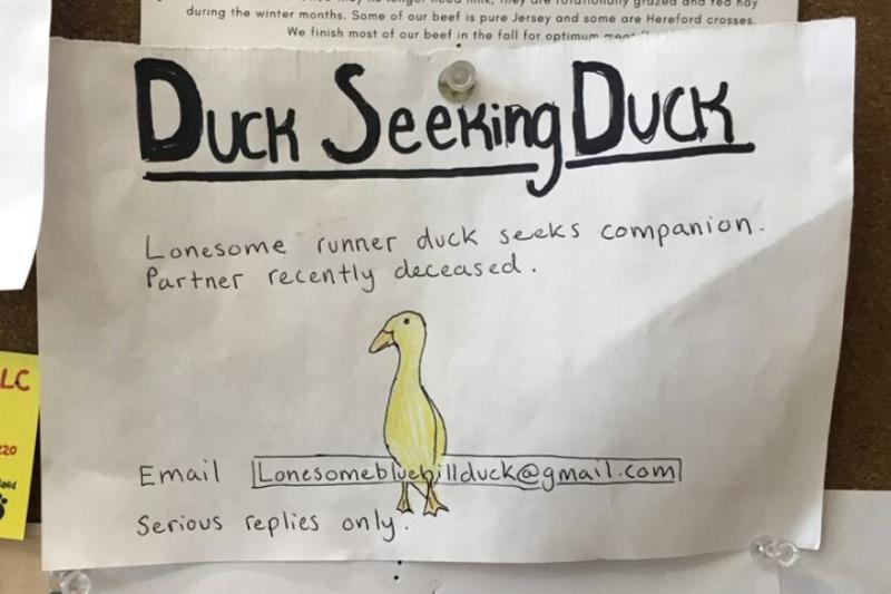 'Serious Replies Only': Man Seeks Companion for His Lonely Duck, Puts Out Dating Ad