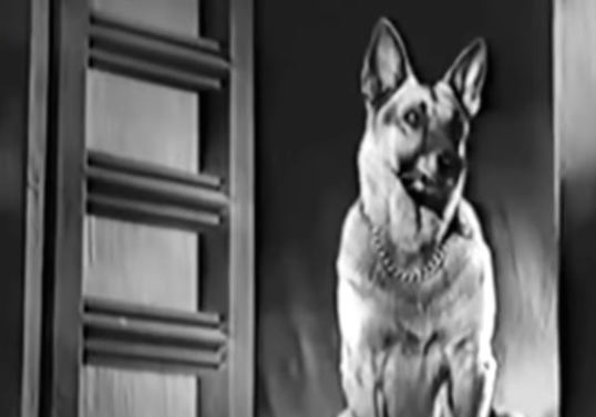 When you are Fearless Nadia's dog, would you be anything short of awesome? Gunboat, the fantastically named German Shepherd had a prominent presence in the whip-cracking superstar's Bambaiwali (1941) and Muqabla (1942). In Muqabla, possibly Hindi cinema's first lost and found story, Nadia plays twin sisters – the fiery Madhuri and the footloose Rani – and Gunboat plays Madhuri's trusted companion. He is the perfect sidekick during the action sequences, keeping a watchful eye on Madhuri and following her commands to the T. During a fight, he even snatches the revolver from Madhuri's assailant and chases him off. Moreover, good boy Gunboat is health conscious and disapproves of smoking. How pawsome is that!