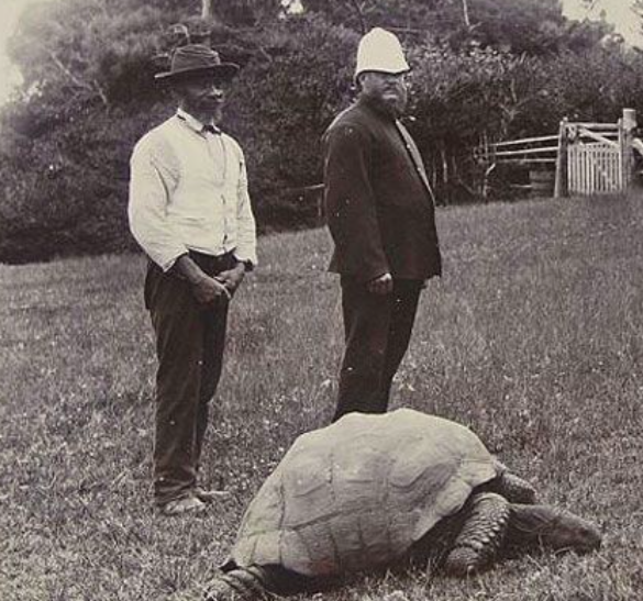 <em>The tortoise has been living on St Helena since he was in his 30s (Wikipedia)</em>