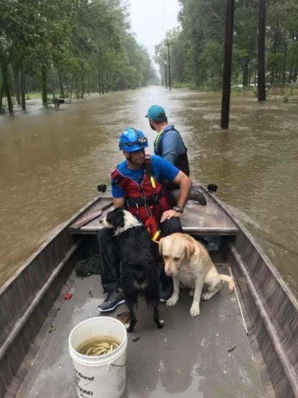 Volunteers for theIslamic Society of Greater Houstonrescue dogs trapped in Hurricane Harvey.