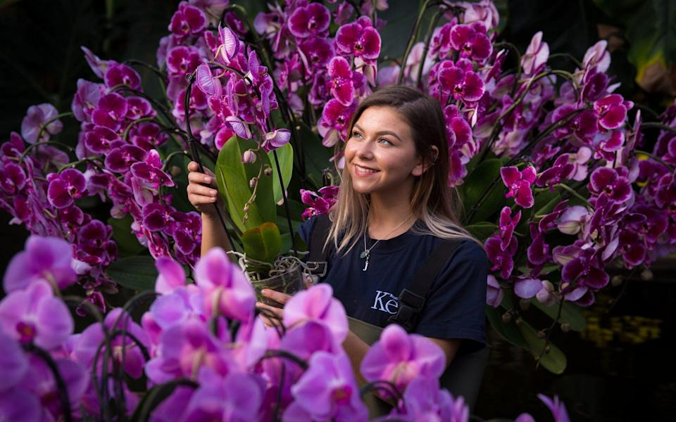 The Royal Botanic Gardens prepares for its first Thai-inspired Orchard Festival in 2018 - Fiona Hanson