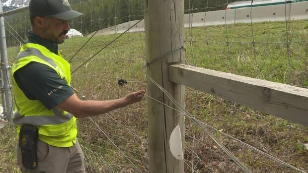 Parks Canada human-wildlife specialist Dan Rafla shows off the electrified section of a wildlife fence along the Trans-Canada Highway in Banff National Park. (Dave Gilson/CBC - image credit)