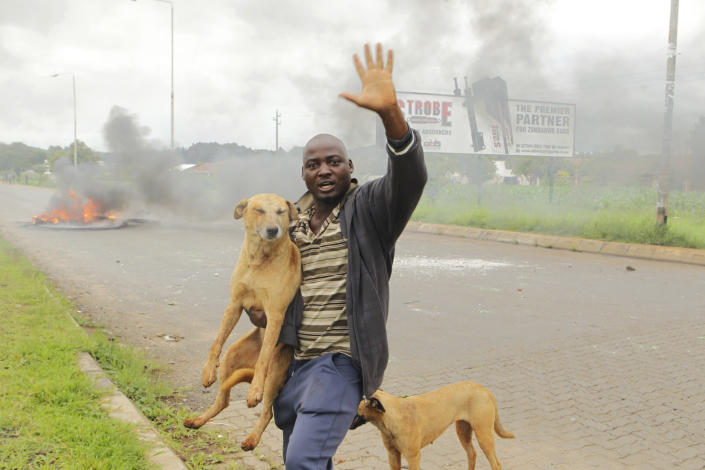 A protestor with his dogs as protestors gather during a demonstration over the hike in fuel prices in Harare, Zimbabwe, Tuesday, Jan. 15, 2019. A Zimbabwean military helicopter on Tuesday fired tear gas at demonstrators blocking a road and burning tires in the capital on a second day of deadly protests after the government more than doubled the price of fuel in the economically shattered country. (AP Photo/Tsvangirayi Mukwazhi)
