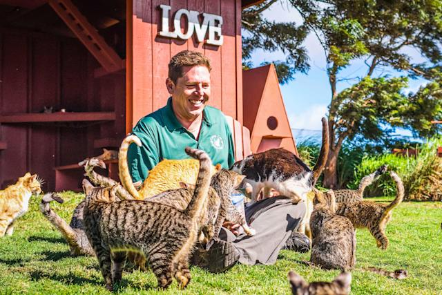 <p>Keoni Vaughn, the Executive Director of the Lanai Cat Sanctuary sits whilst being innundated by cats below a Love sign at the haven of kittys. (Photo: Andrew Marttila/Caters News) </p>