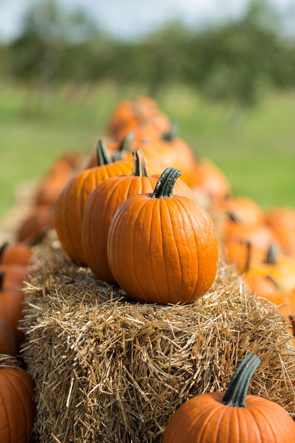 "<p>Visit <a href=""https://www.countryliving.com/life/travel/g21273436/pumpkin-farms-near-me/"" rel=""nofollow noopener"" target=""_blank"" data-ylk=""slk:your local pumpkin farm"" class=""link rapid-noclick-resp"">your local pumpkin farm</a> and pick up the perfect gourds to transform with the <a href=""https://www.countryliving.com/diy-crafts/g279/pumpkin-carving-ideas/"" rel=""nofollow noopener"" target=""_blank"" data-ylk=""slk:best pumpkin carving ideas"" class=""link rapid-noclick-resp"">best pumpkin carving ideas</a>. </p><p><a class=""link rapid-noclick-resp"" href=""https://www.amazon.com/Halloween-Haunters-Ultimate-Professional-Lanterns/dp/B074XJHZX7/?tag=syn-yahoo-20&ascsubtag=%5Bartid%7C2139.g.34440360%5Bsrc%7Cyahoo-us"" rel=""nofollow noopener"" target=""_blank"" data-ylk=""slk:SHOP PUMPKIN CARVING KIT"">SHOP PUMPKIN CARVING KIT</a></p>"