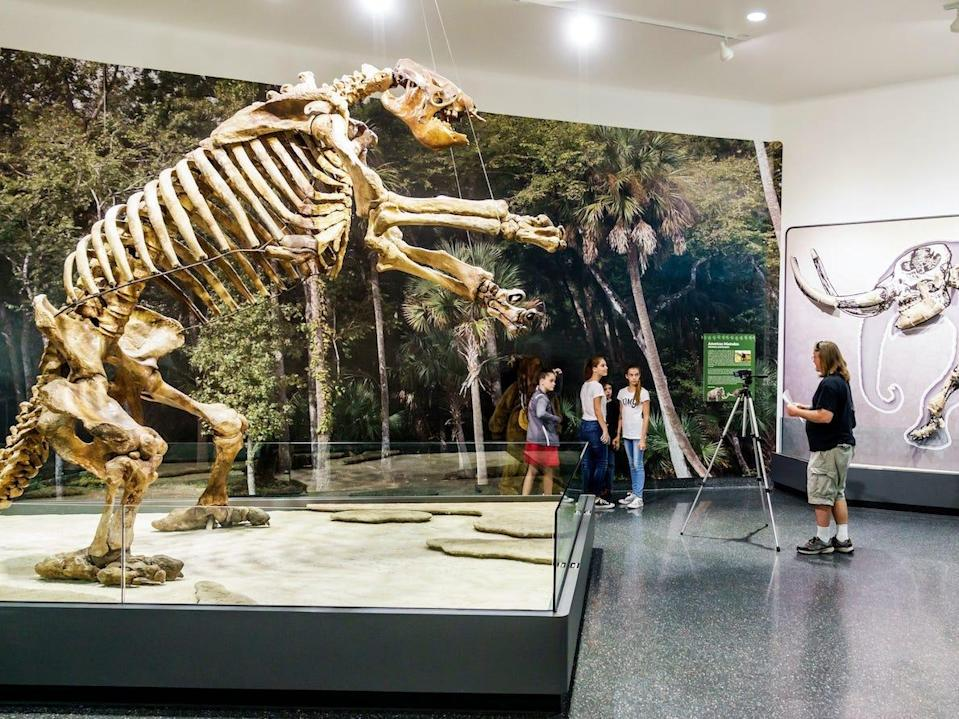 Other giant ground sloth skeletons have been found in places like Daytona Beach, Florida.