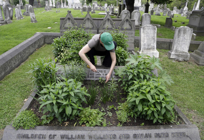 Volunteer Jennifer Walker clears an area as she plants on the Keen family plot at the Woodlands Cemetery Saturday May 4, 2019 in Philadelphia. The cemeteries of yore existed as much the living as for the dead. And a handful of these 19th century graveyards are restoring the bygone tradition of cemetery gardening. (AP Photo/Jacqueline Larma)
