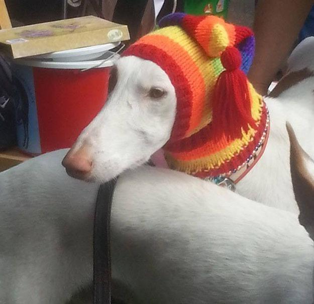"<p>""I have spent over 4,000 hours knitting, but it's all worthwhile when I see them sporting their new jumpers and hats."" <i>(Photo: Jan Brown via <a href=""https://www.facebook.com/KnittedDogClothes/photos_stream"" rel=""nofollow noopener"" target=""_blank"" data-ylk=""slk:Facebook"" class=""link rapid-noclick-resp"">Facebook</a>)</i><br></p>"