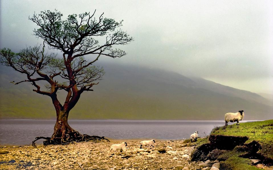 Loch Lomond was one of hundreds of lakes included in the study - Getty Images Contributor