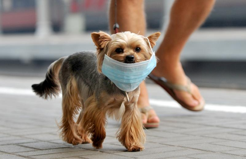 Smoking is bad for pets too, the University of Glasgow said, citing an ongoing study into the effects of second-hand smoke on dogs and cats