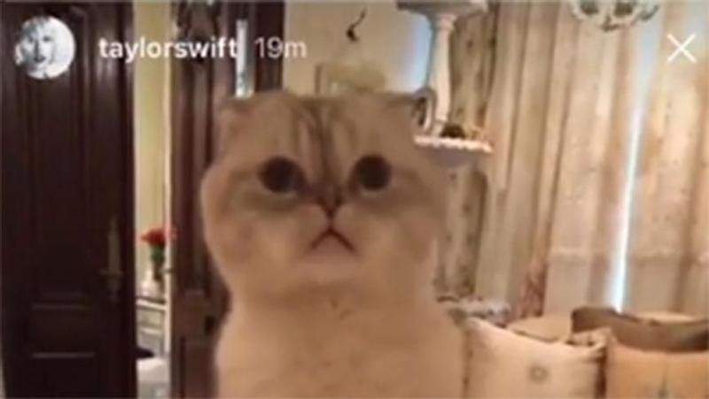 Taylor Swift Ends Social Media Blackout With Cute Cat Video