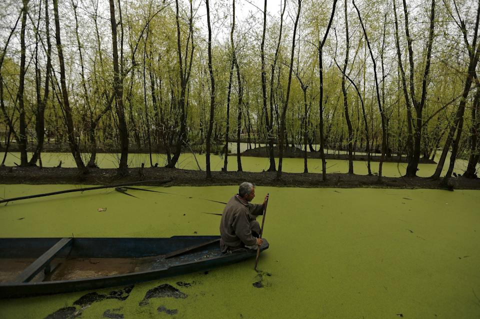 A man paddles his boat along the weed-covered interiors of Nigeen Lake in Srinagar March 17, 2016. REUTERS/Danish Ismail      TPX IMAGES OF THE DAY