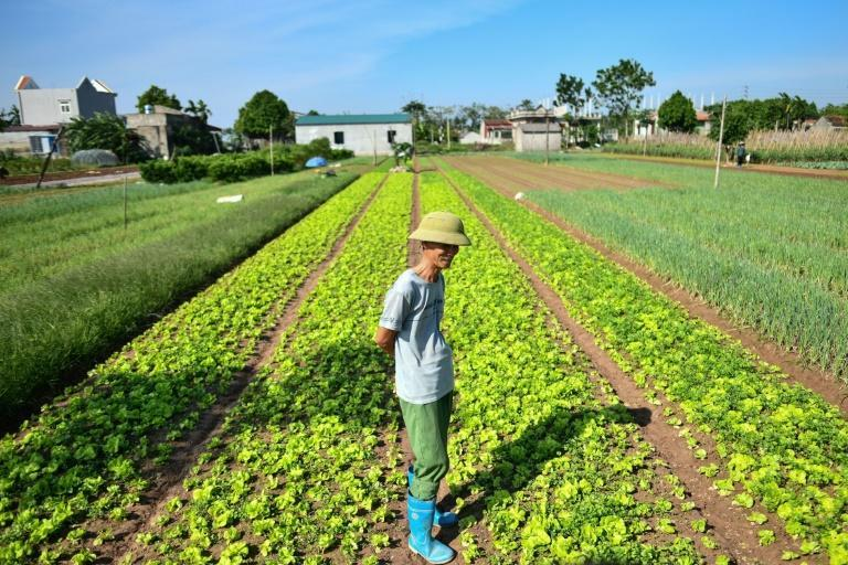 Heavy metals found in soil or water used for agriculture in Vietnam may be a significant contributor to the incidence of some forms of cancer, the World Bank says, while heavy pesticide use may also have long-term impacts