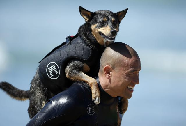 A man carries his dog on his back during the Surf City surf dog competition in Huntington Beach, California, September 29, 2013. REUTERS/Lucy Nicholson (UNITED STATES - Tags: SPORT ANIMALS SOCIETY)