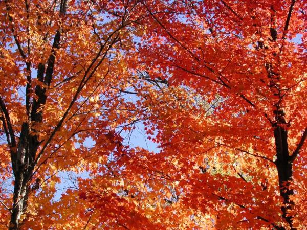 Leaf Peepers: Expect Spotty Fall Colors Around US