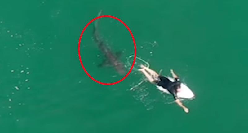Matt Wilkinson did not notice the 1.5-metre shark behind him. Source: Surf Life Saving NSW