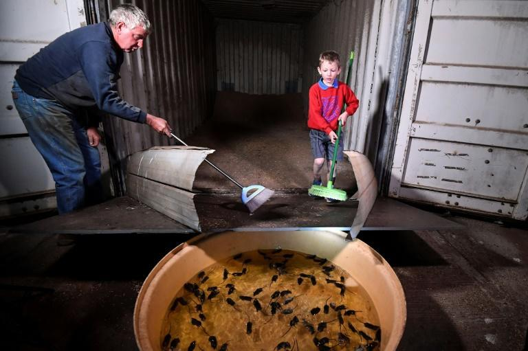 Farmer Col Tink has employed a makeshift system to drown mice that are ravaging farms in eastern Australia