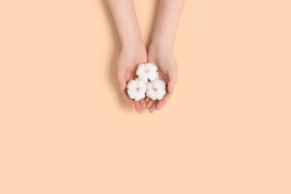 Female hands hold cotton flowers on a beige background. Natural eco concept.