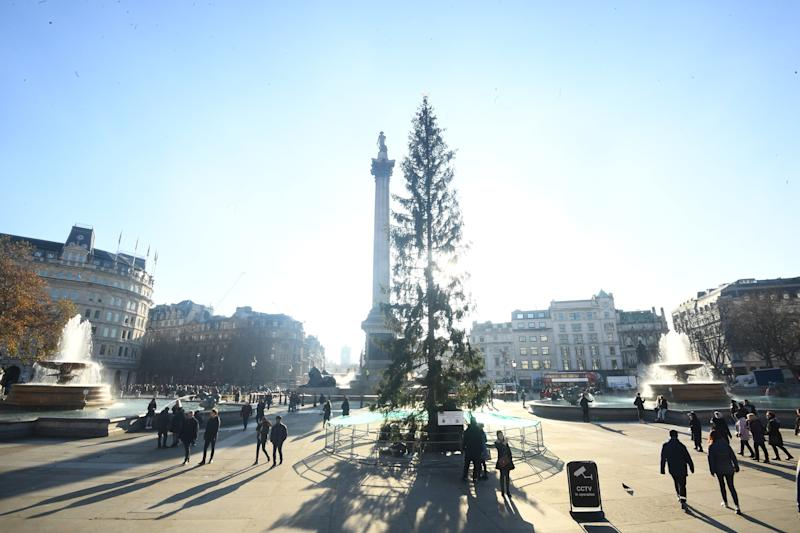 The Christmas tree in Trafalgar Square, which is given every year by the city of Oslo as a token of Norwegian gratitude to the people of London for their assistance during the Second World War, and whose lights will be turned on Thursday evening. However some people are concerned that it's looking a little thinner than usual.