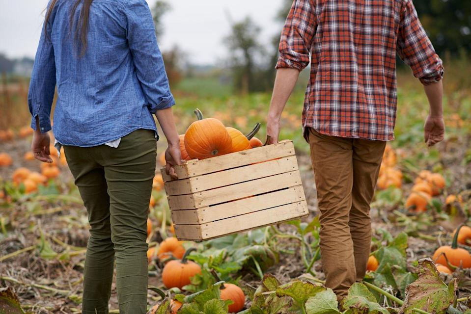 """<p>Already a great autumnal outdoor activity, many pumpkin patches, apple orchards, and farms are implementing social distancing protocols for their visitors. Make sure to grab some apple cider while you're there. </p><p><strong>More: </strong><a href=""""https://www.townandcountrymag.com/leisure/travel-guide/g22538627/best-pumpkin-picking-near-nyc/"""" rel=""""nofollow noopener"""" target=""""_blank"""" data-ylk=""""slk:The 9 Best Pumpkin Patches Near NYC"""" class=""""link rapid-noclick-resp"""">The 9 Best Pumpkin Patches Near NYC</a></p>"""