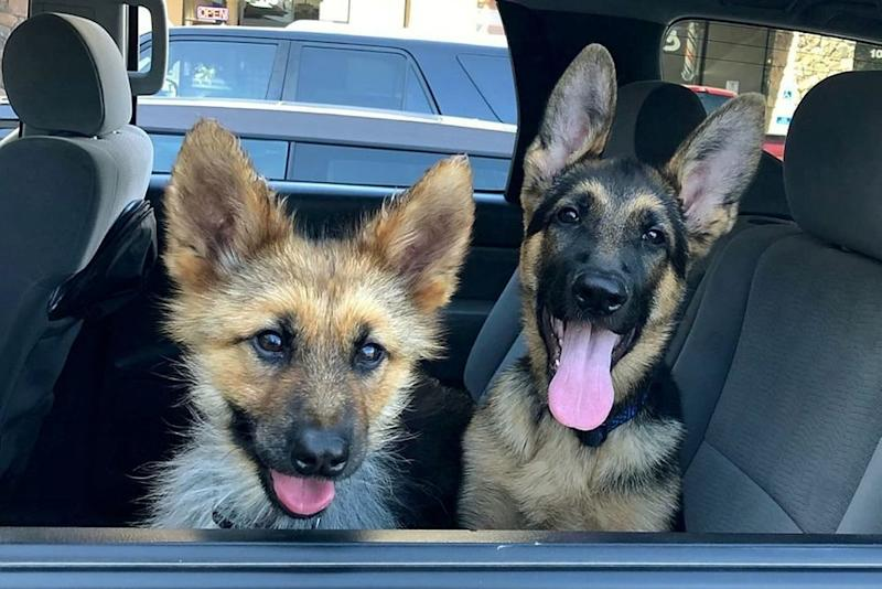 Ranger and puppy pal | SWNS