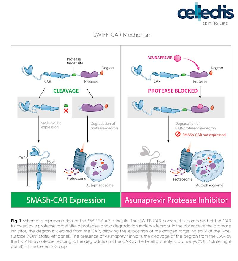 Cellectis Publishes New CAR Design to Control CAR T-Cells in Non-Lethal Way