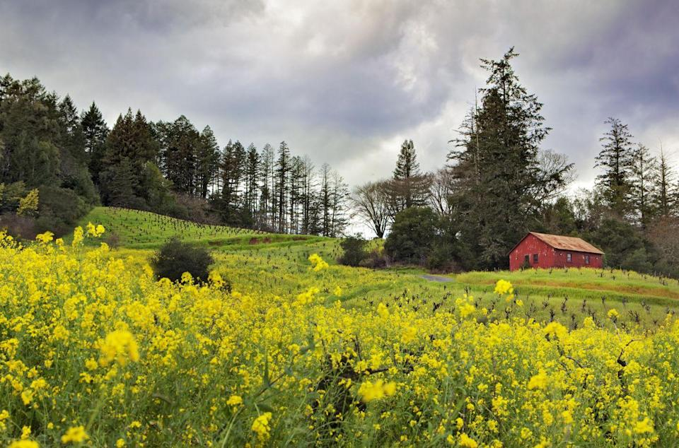 <p>This northern Sonoma County town is a lesser-known destination for wine tasting, but no less gorgeous. If you've had your fill of pinot, there's still plenty to do, including hiking, biking and even canoeing.</p>