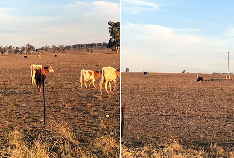 Barren land is a common sight across NSW. Source: Supplied