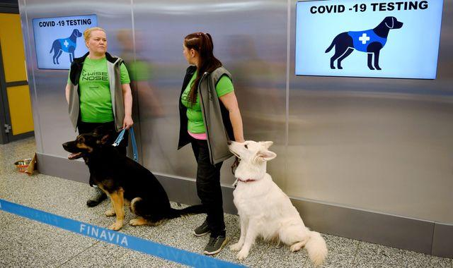 Coronavirus: Dogs deployed at Helsinki Airport to sniff out virus