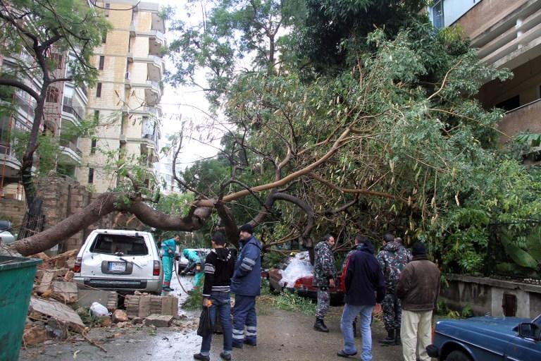 Municiple workers remove a downed tree in the Lebanese capital Beirut, on January 7, 2013, following a night of high winds and heavy rain fall.  AFP PHOTO/MIKE ITANI