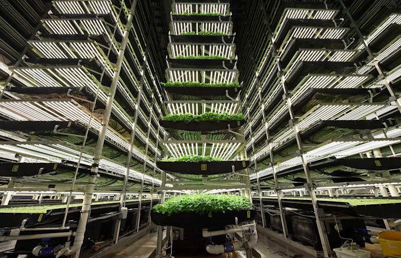 "AeroFarms' vertical grow towers on February 19, 2019, in Newark, New Jersey. - AeroFarms, founded in 2004, is the largest vertical farm in the world. The company is considered a pioneer of the sector. It has chosen to fully develop its own technologies which it exports around the world, with projects in China, the Middle East and Northern Europe, according to its co-founder Marc Oshima. (Photo by Angela Weiss / AFP) / TO GO WITH AFP STORY by Juliette MICHEL, ""How I found the taste of my grandmother's soup in a salad factory"" (Photo credit should read ANGELA WEISS/AFP via Getty Images)"